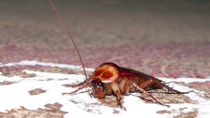 Если завелись тараканы это к чему