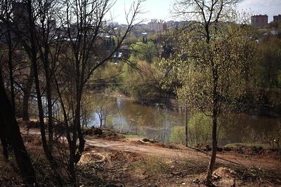 В лесопарке «Елочки» Подольска в субботу высадят 100 саженцев ели