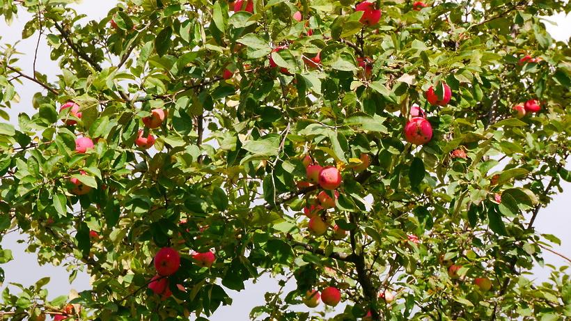 Редкие сорта кустарников и деревьев в Ивантеевском лесопитомнике планируют возродить