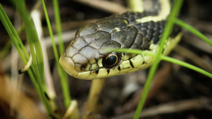 В Подмосковье проснулись змеи - первое нападение гадюки произошло на Пике Тяпкина в Дубне