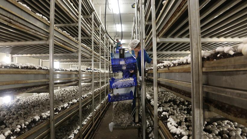 Грибную ферму вЗарайске планируют запустить вконце зимы предстоящего года