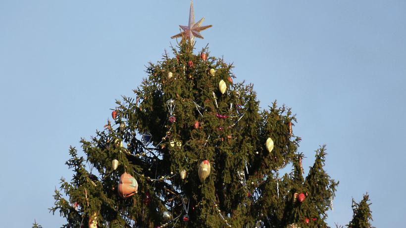 gallery!0vqw - Две новые ели, световые шары и спирали украсят Мытищи к Новому году