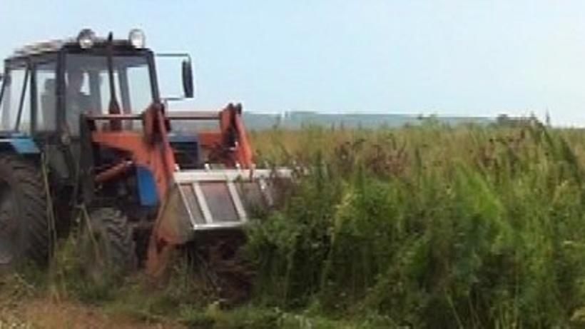Полицейские вРаменском районе уничтожили около 1 тонны дикорастущей конопли