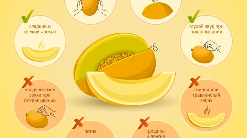 Как правильно выбрать дыню-Инфографика-РИАМО