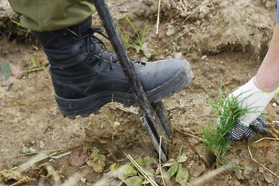 Почти 12 тыс деревьев высадят в Красногорске в субботу в ходе экоакции «Наш лес»
