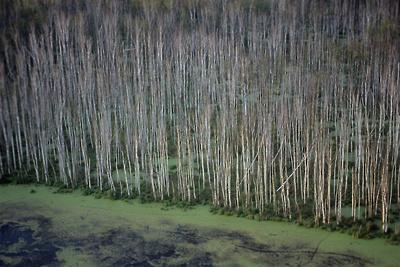 Более 15 тыс кубометров порубочных остатков вывезли из национального парка «Лосиный остров»