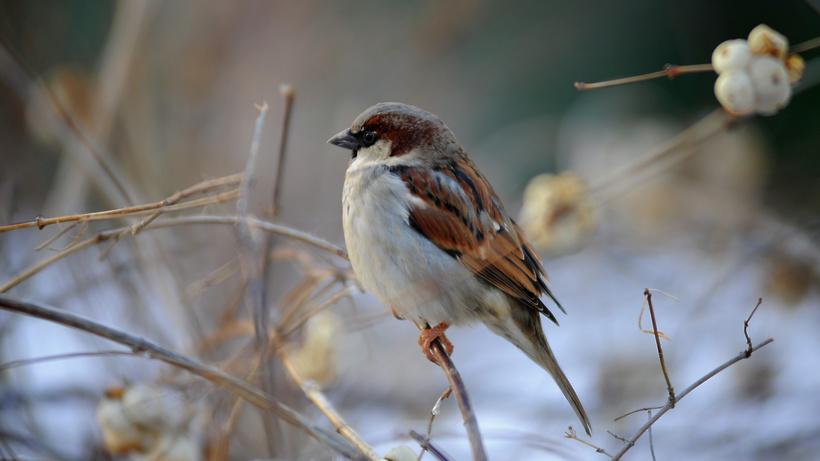 Практически 600 кормушек для птиц установили в столичных парках