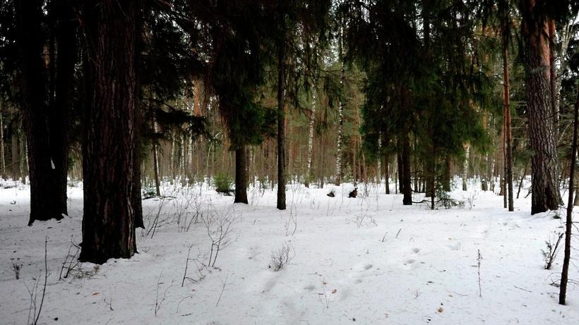 Свыше 9 тыс. гектаров подмосковных лесов зарегистрировано в федеральную собственность в 2016 году