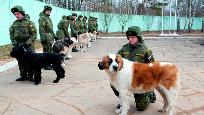 Сделать легальную регистрацию в москве
