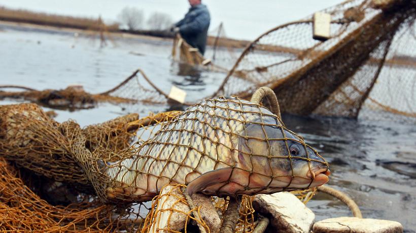 сезон ловли рыбы сетями