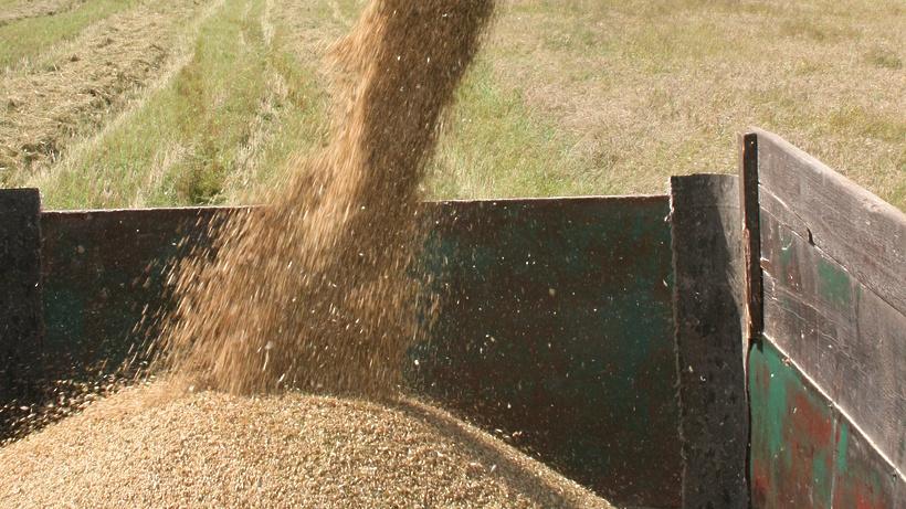 Урожай зерна в РФ в2015-м году будет рекордным современ СССР