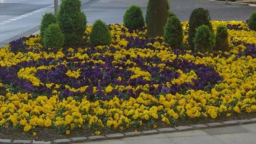 Фото цветов городских клумб