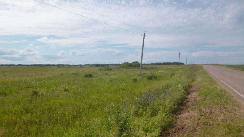 Первая изъятая за неиспользование сельхозземля в Подмосковье обрела нового собственника