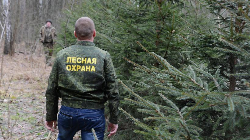 Жителям региона напомнили о соблюдении правил пожарной безопасности в лесах