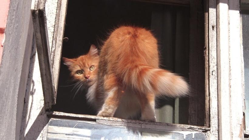 В столице России коты начали чаще летать сбалконов
