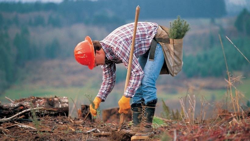 Неменее 200 деревьев посадят вКоролеве врамках экологической акции 17сентября