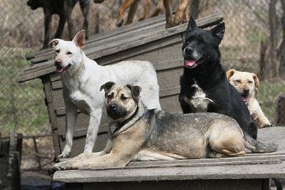 Карантин по бешенству животных отменили в Талдомском округе