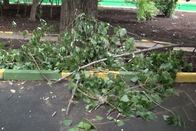 Госадмтехнадзор призвал убрать весь сухостой на улицах Лосино‑Петровского за две недели