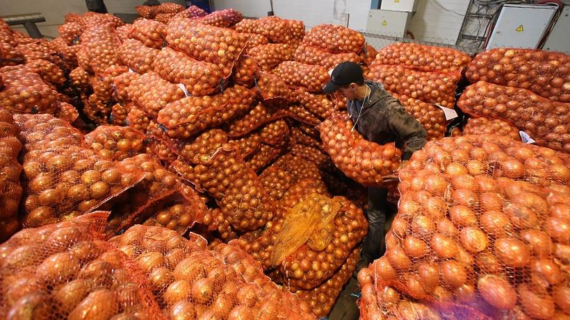сделает купить фрукты на овощебазе в спб частности