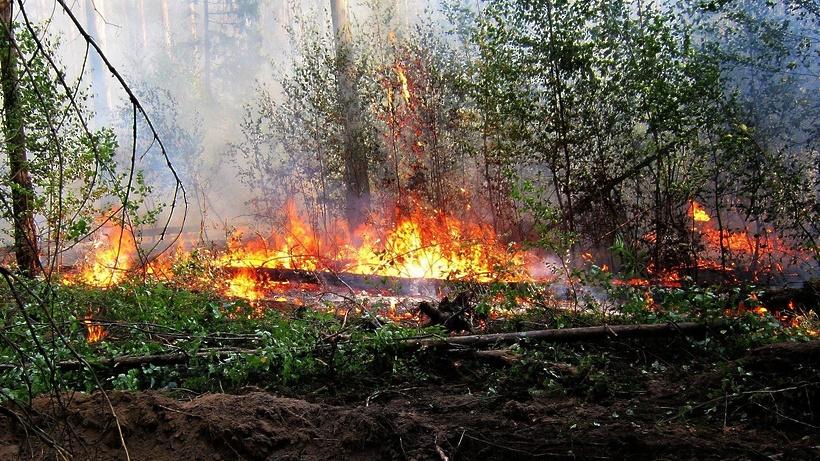 В Подмосковье определили территории, подверженные угрозе лесных пожаров