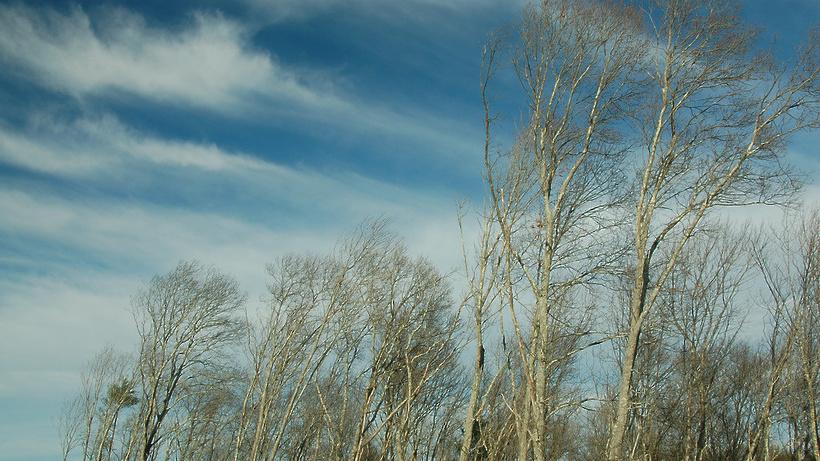 МЧС предупреждает обусилении ветра до20 м/с вПодмосковье 13сентября