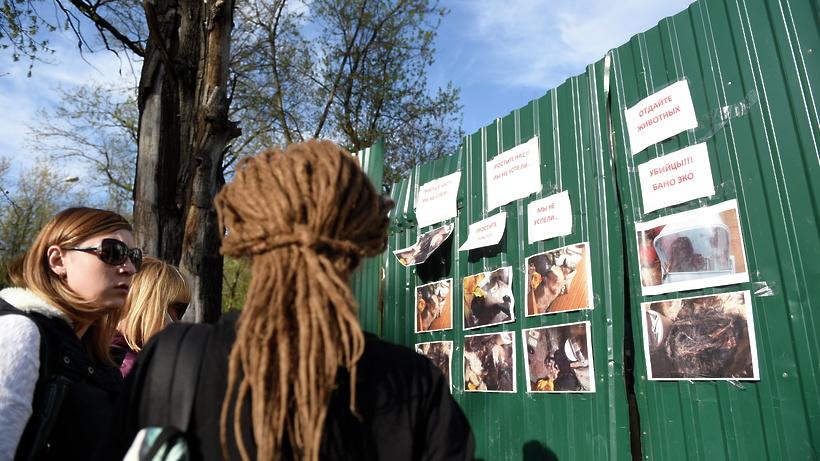 Дело ослужебном подлоге могут возбудить на руководителя зооприюта в столичных Вешняках