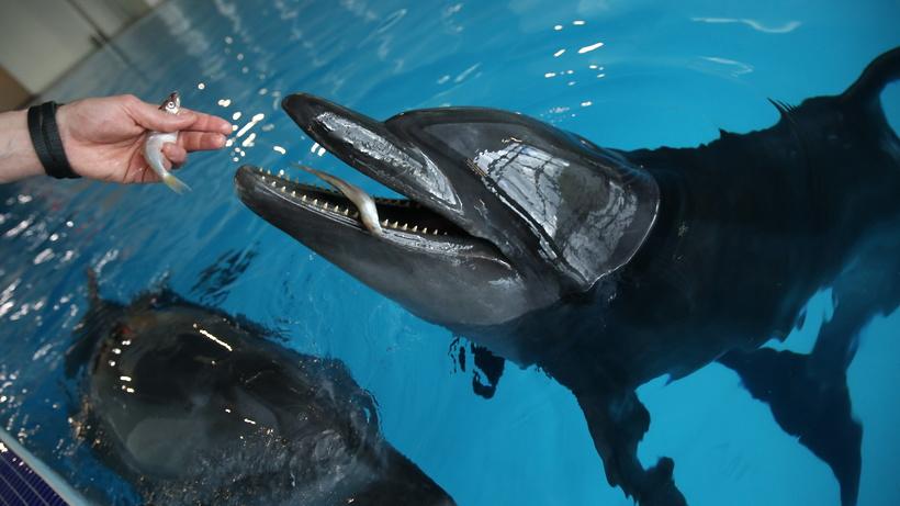 Видеопредставление с дельфинами подготовил «Москвариум» ко Дню океанов