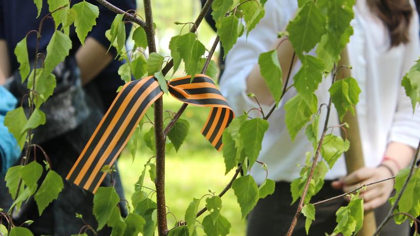 Зампред Чупраков пригласил жителей Подмосковья принять участие в акции «Лес Победы» 29 апреля