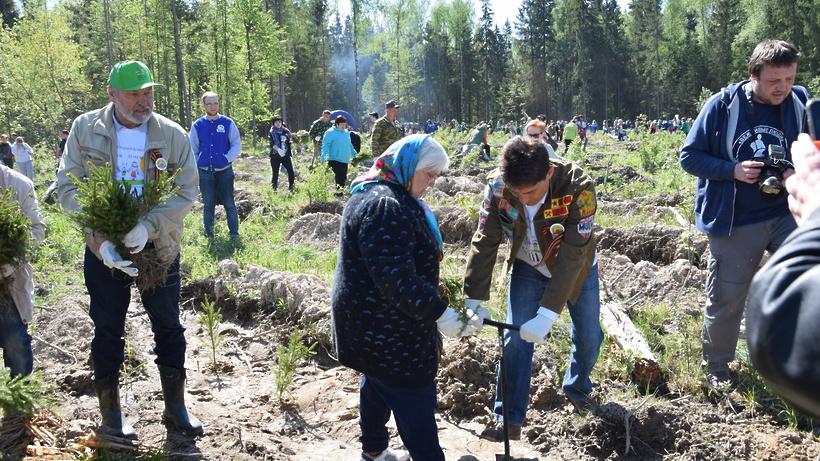 Эколого-патриотическая акция «Лес Победы» состоится в Подмосковье в субботу
