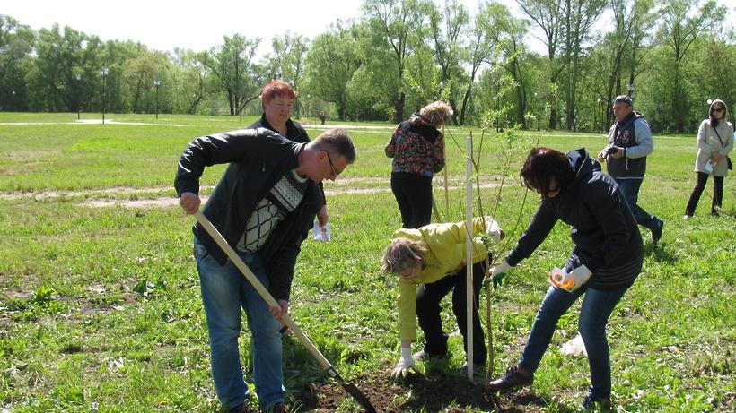 ВПодмосковье врамках акции «Лес Победы» высадят 1,4 млн деревьев