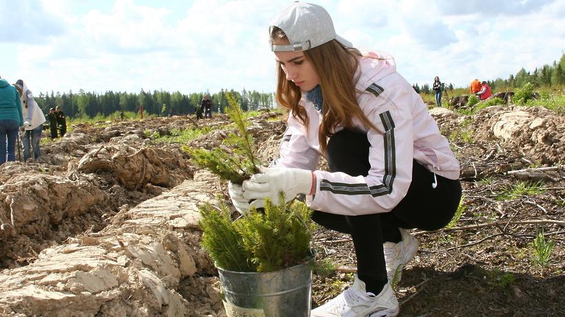 Все подмосковные школы и вузы примут участие в акции «Лес Победы»