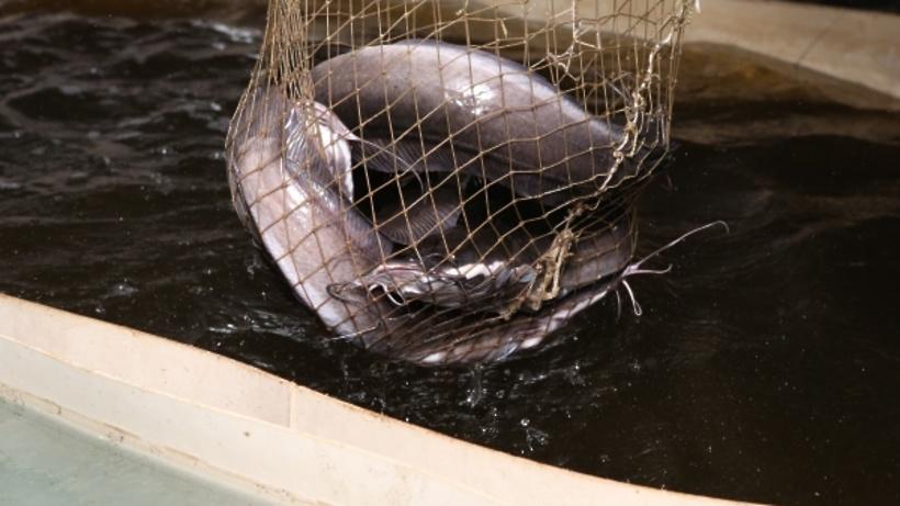 Компания «Дальфиш» займется поставками рыбы в Италию