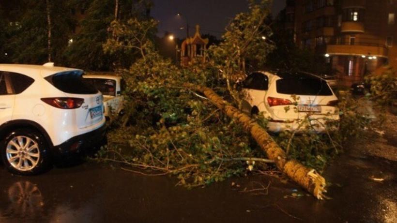 Собянин объявил оликвидации последствий урагана в столице России