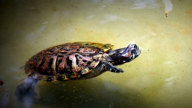 Бассейны для черепах и крокодилов появится в коломенском экзоприюте в этом году