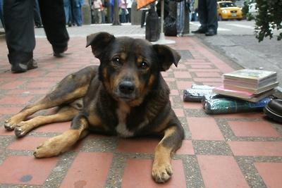 Неизвестные раскидали отраву для собак в парке Подольска
