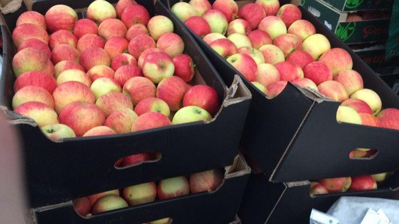 ВТюмени уничтожили большую партию польских яблок игруш