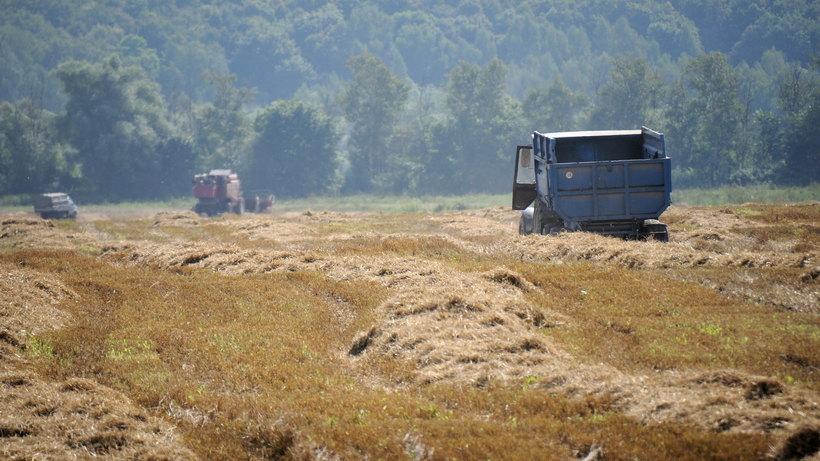 Порядка 16 заброшенных молочных ферм реконструируют вПодмосковье доконца года