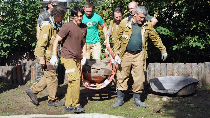 Огромные сухопутные черепахи переехали втеплые вольеры зоопарка