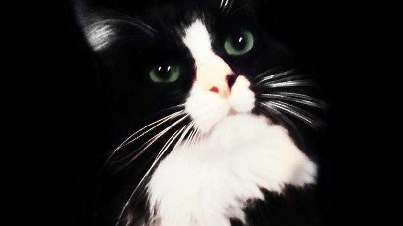 Пермский кот-артист потерялся нагастролях в российской столице