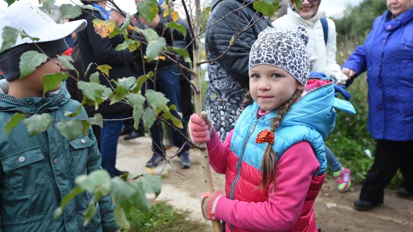 Деревья икустарники высадят в основном округе столицы текущей осенью