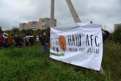 200 деревьев посадят в микрорайоне Павшинская пойма Красногорска в ходе акции в субботу