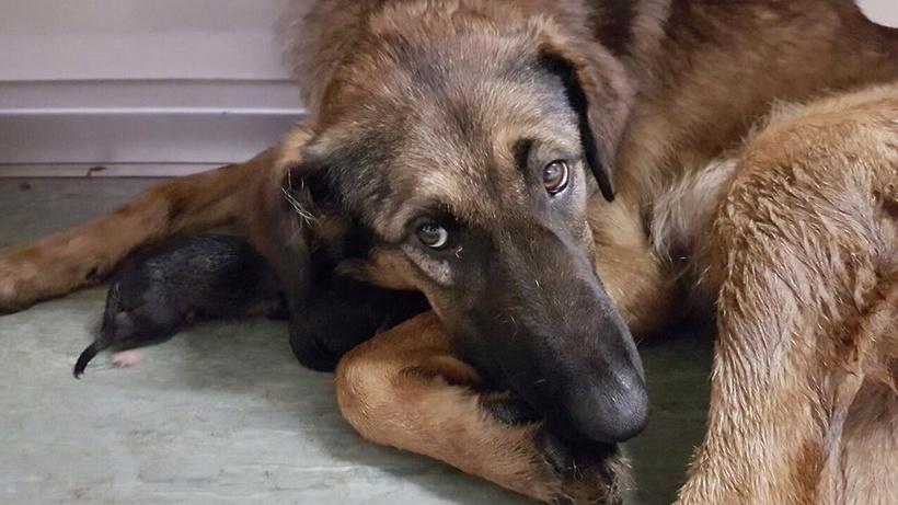 Зоозащитники вступились заощенившуюся вметро собаку