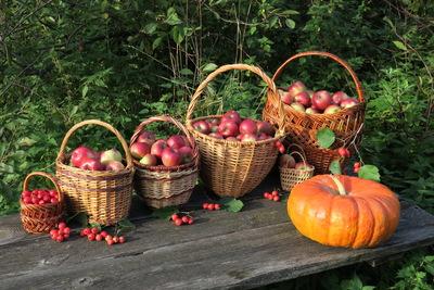 Праздник урожая «Яблочный джем» пройдет в Лосино‑Петровском
