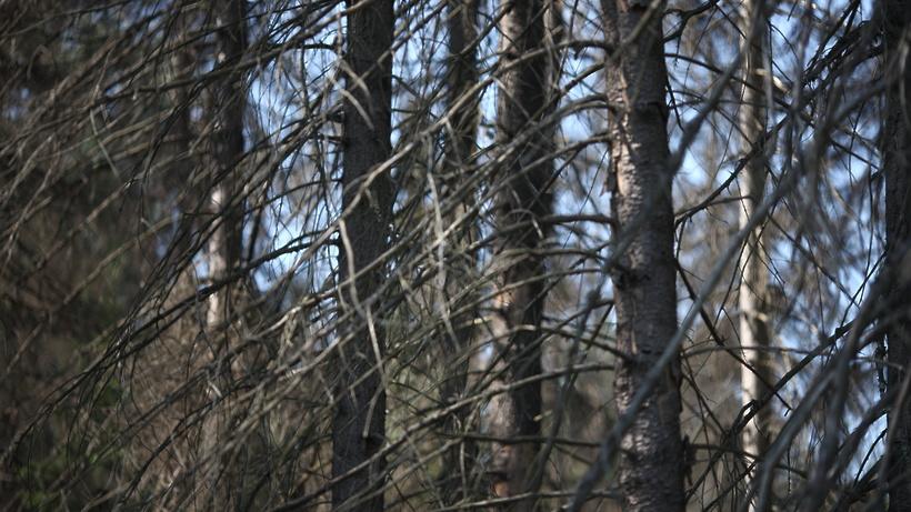 Новости Коломны   В Луховицах полицейские пять часов искали в лесу потерявшуюся пенсионерку Фото (Коломна)   proisshestviya i prestupleniya v kolomne iz zhizni kolomnyi