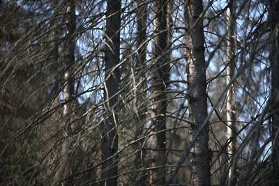 Заказник с краснокнижными птицами в Павловском Посаде обретет четкие границы