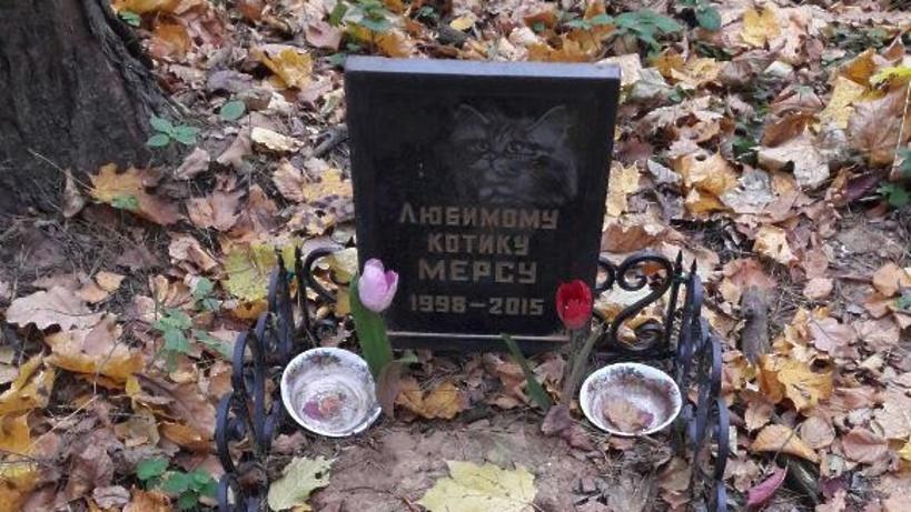 ВПодмосковье обнаружили нелегальное кладбище домашних питомцев