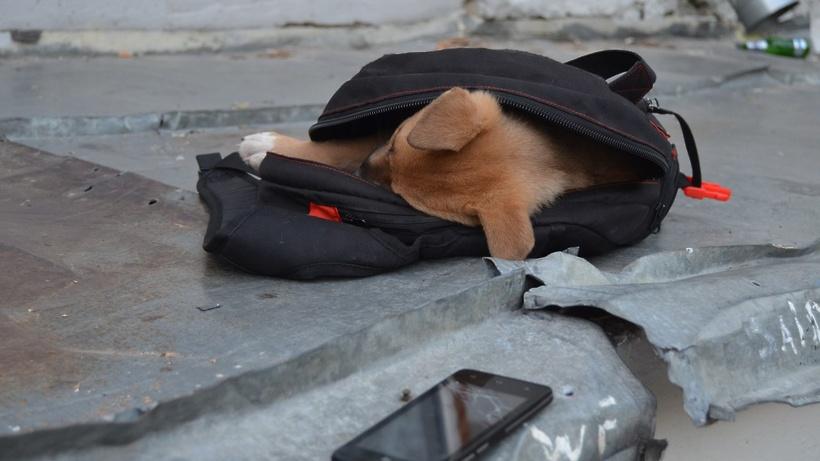 Генпрокуратура проверяет информацию омассовом отравлении собак вЛыткарино