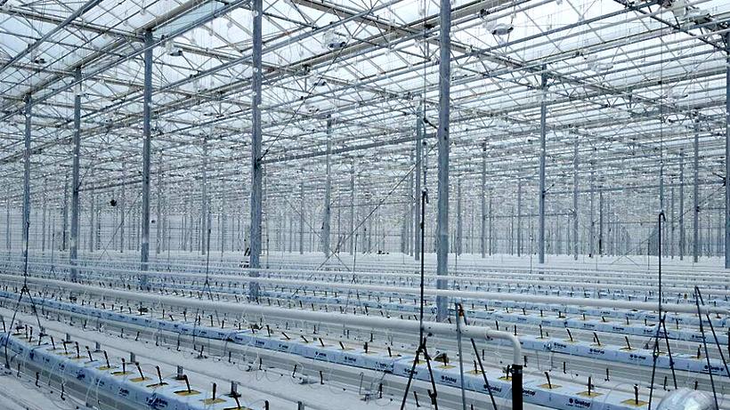 Объем инвестиций в создание тепличного комплекса в Каширском районе оценивается в 5,1 миллиарда рублей – Елянюшкин