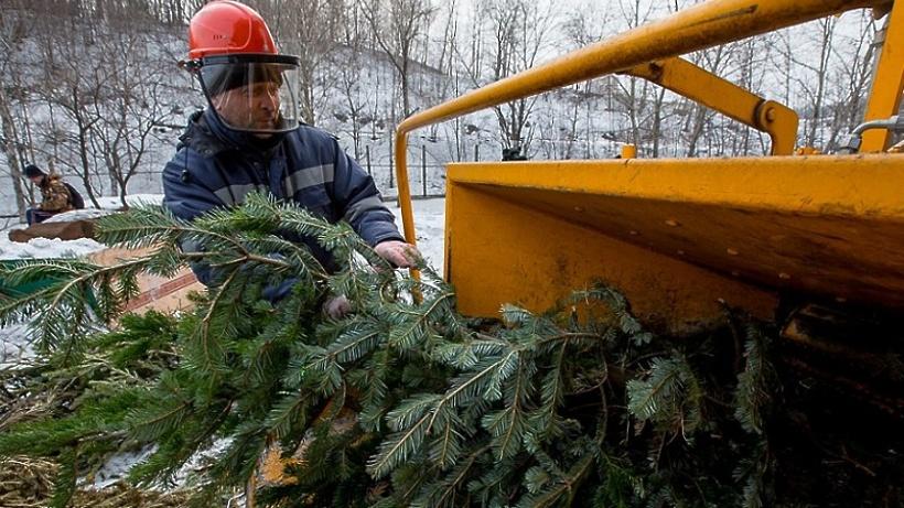 Более 200 пунктов сбора новогодних елок откроются в Подмосковье в пятницу