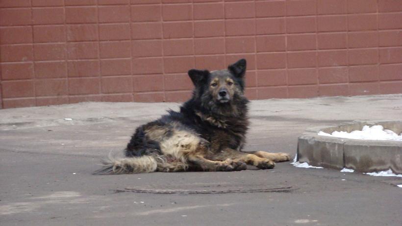 Карантин побешенству животных введен вКнягининском районе